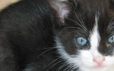 Como saber la edad de un gato