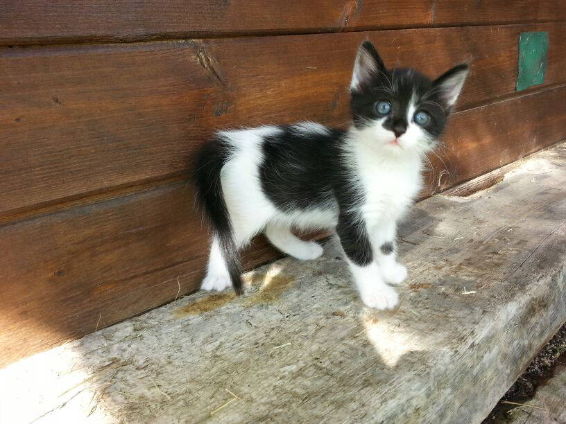 Como saber la edad de un gato gatosphera gatosphera - Gatitos de un mes ...