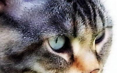 Bella, la princesa de los ojos de hielo.