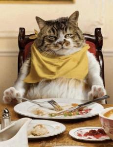 Que le doy de comer a mi gato