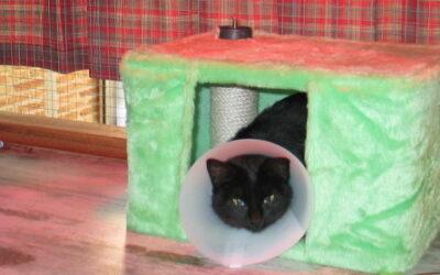 Refugios para gatos callejeros o de colonias