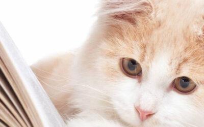 Alma de gato