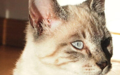 Kato – Gato en adopción…