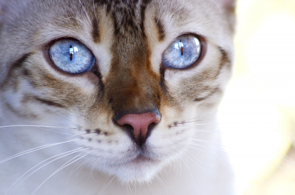 Can Cat Vaccination Cause Fur To Fall Out