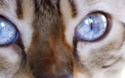 Book fotográfico de tu gato