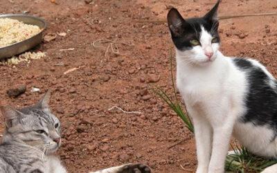 Que hacer si nos encontramos uno o varios gatitos en la calle