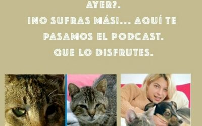 Podcast Lenguas de Gato. Programa 8
